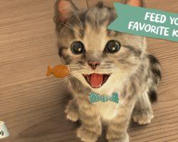 little-kitten-ios-app